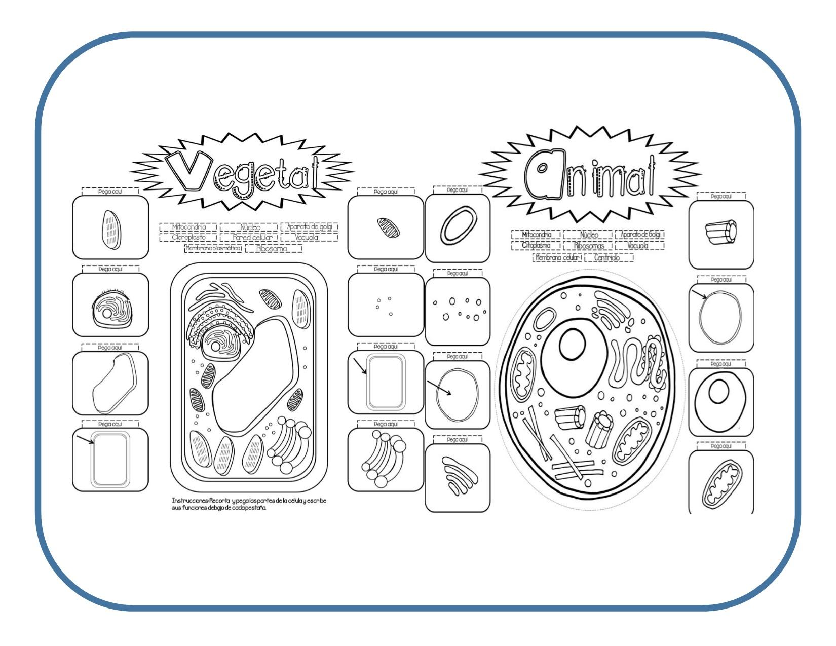 Excelente material interactivo para aprender la célula vegetal y animal